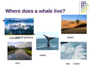 Where does a whale live? whale desert sea ocean mountains river
