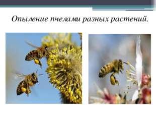 Опыление пчелами разных растений.