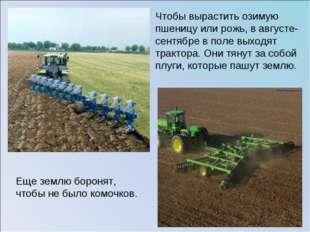 Чтобы вырастить озимую пшеницу или рожь, в августе-сентябре в поле выходят тр