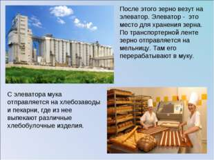 После этого зерно везут на элеватор. Элеватор - это место для хранения зерна.