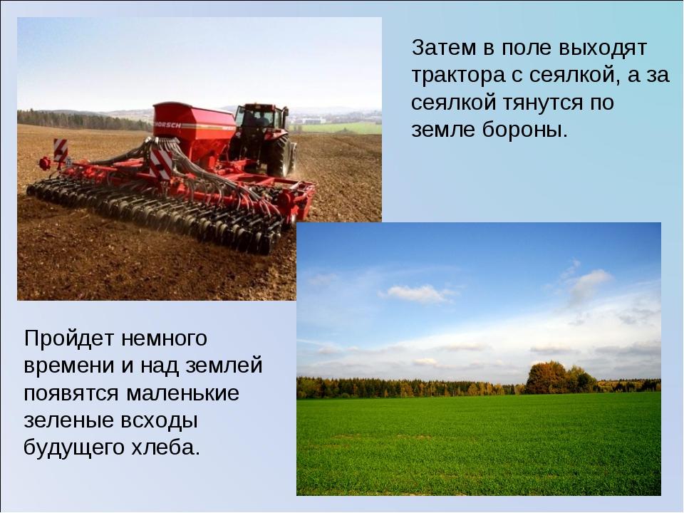 Затем в поле выходят трактора с сеялкой, а за сеялкой тянутся по земле бороны...