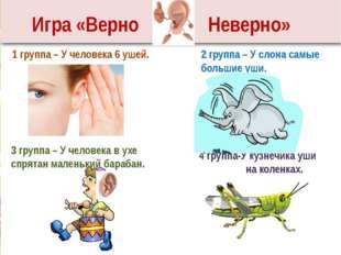 1 группа – У человека 6 ушей. 2 группа – У слона самые большие уши. 3 группа