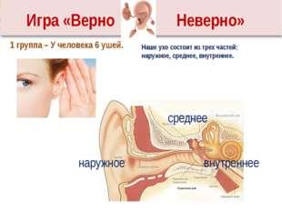 Наше ухо состоит из трех частей: наружное, среднее, внутреннее. 1 группа – У
