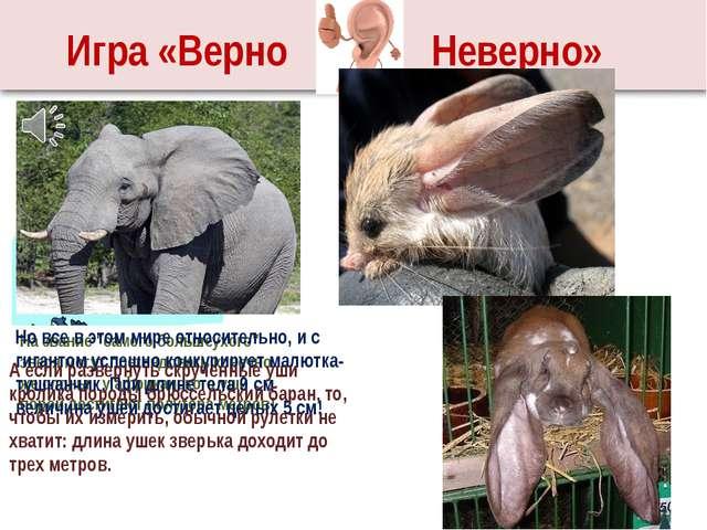 """2 группа – У слона самые большие уши. И Игра «Верно Неверно» На звание """"самог..."""