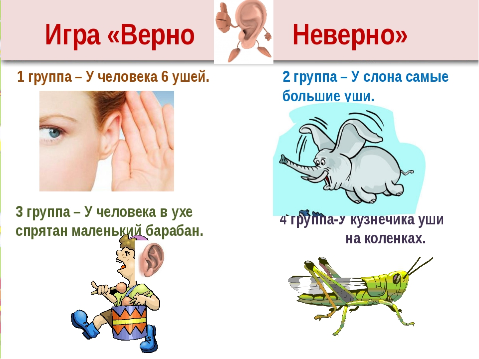 1 группа – У человека 6 ушей. 2 группа – У слона самые большие уши. 3 группа...