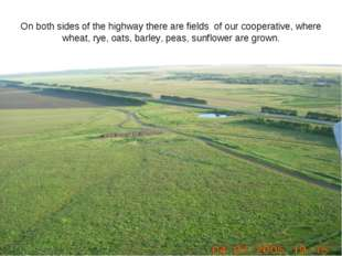 On both sides of the highway there are fields of our cooperative, where wheat