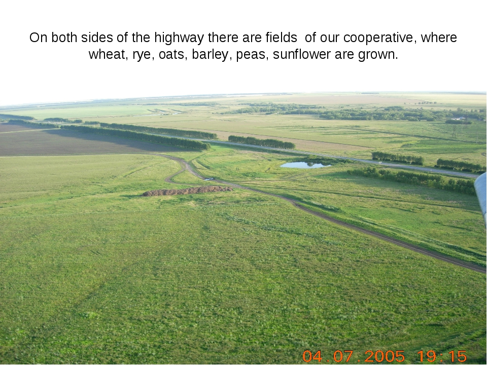 On both sides of the highway there are fields of our cooperative, where wheat...