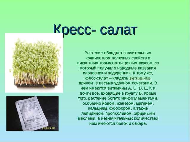 Кресс- салат Растение обладает значительным количеством полезных свойств и пи...