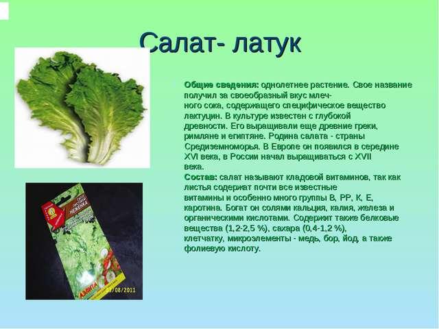 Салат- латук Общие сведения:однолетнее растение. Свое название получил за св...
