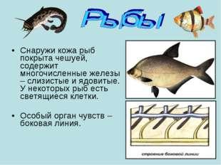 Снаружи кожа рыб покрыта чешуей, содержит многочисленные железы – слизистые и