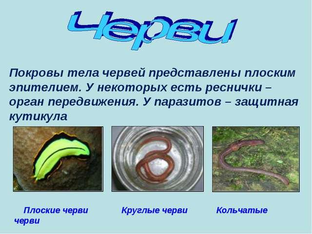 Плоские черви Круглые черви Кольчатые черви Покровы тела червей представлены...