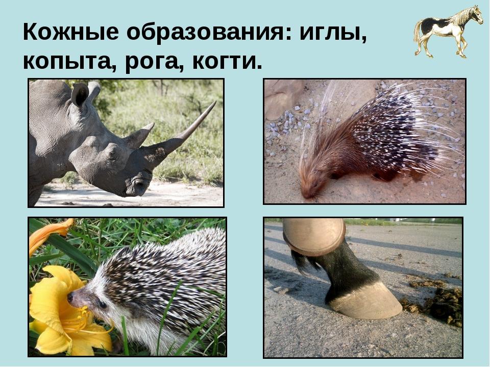 Кожные образования: иглы, копыта, рога, когти.