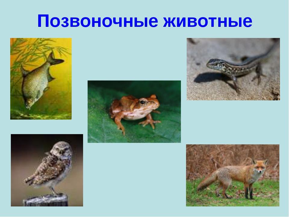 Позвоночные животные