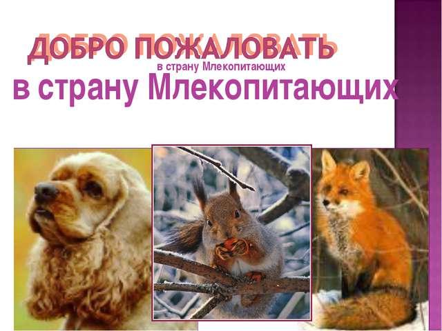 в страну Млекопитающих в страну Млекопитающих