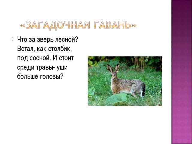 Что за зверь лесной? Встал, как столбик, под сосной. И стоит среди травы- уши...