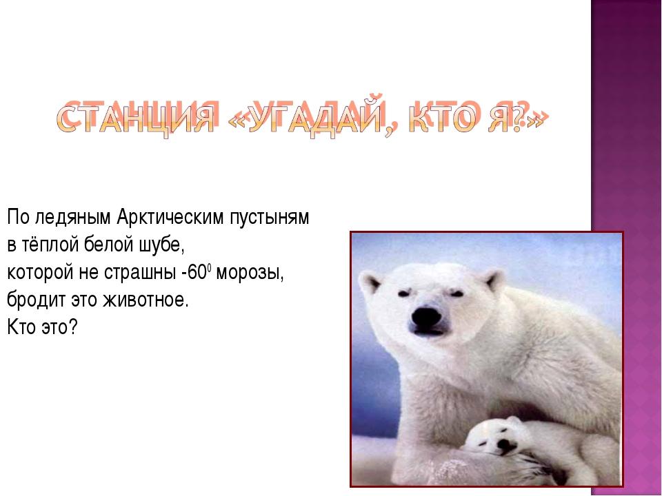 По ледяным Арктическим пустыням в тёплой белой шубе, которой не страшны -600...