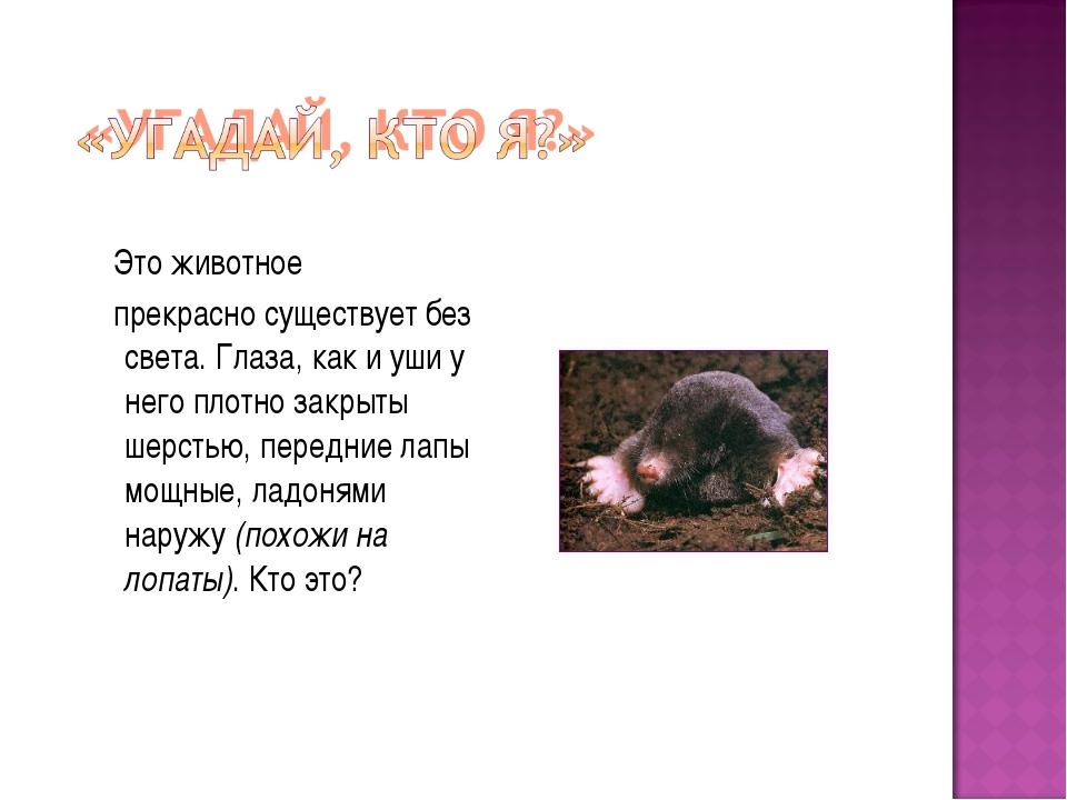 Это животное прекрасно существует без света. Глаза, как и уши у него плотно...