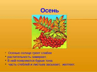 Осень Осенью солнце греет слабее растительность замирает. В ней появляются бу
