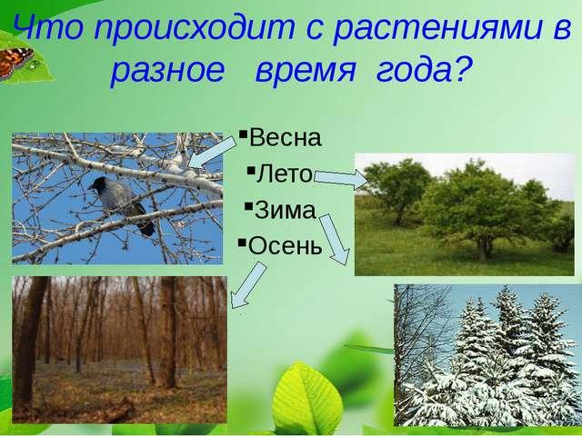 Что происходит с растениями в разное время года? Весна Лето Зима Осень