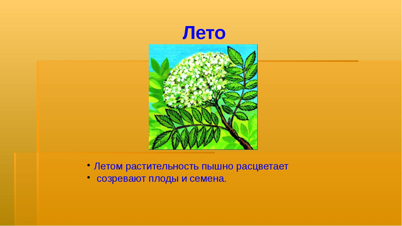 Лето Летом растительность пышно расцветает созревают плоды и семена.