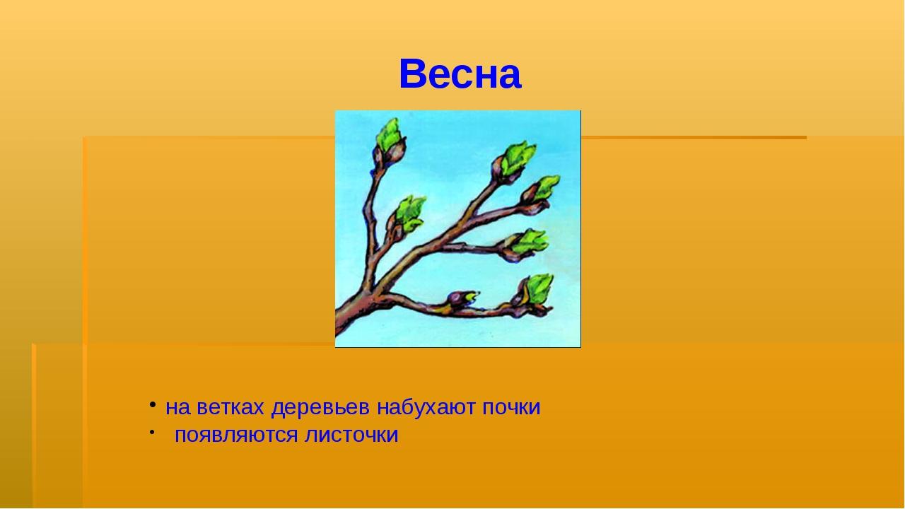 Весна на ветках деревьев набухают почки появляются листочки