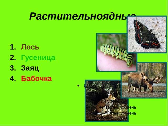 Растительноядные. Лось Гусеница Заяц Бабочка