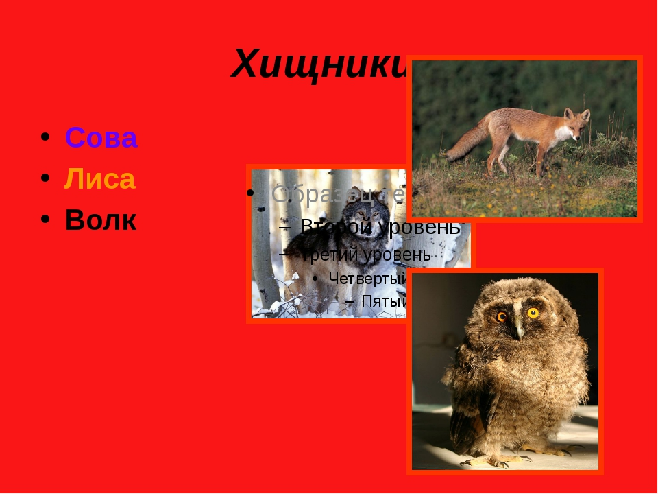 Хищники. Сова Лиса Волк