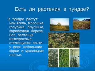 Есть ли растения в тундре? В тундре растут: мох ягель, морошка, голубика, бр