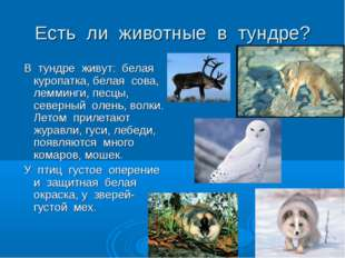 Есть ли животные в тундре? В тундре живут: белая куропатка, белая сова, лемми