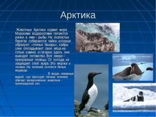 Арктика  Животных Арктики кормит море . Морскими водорослями питаются рачки,