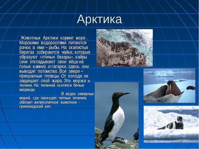 Арктика  Животных Арктики кормит море . Морскими водорослями питаются рачки,...