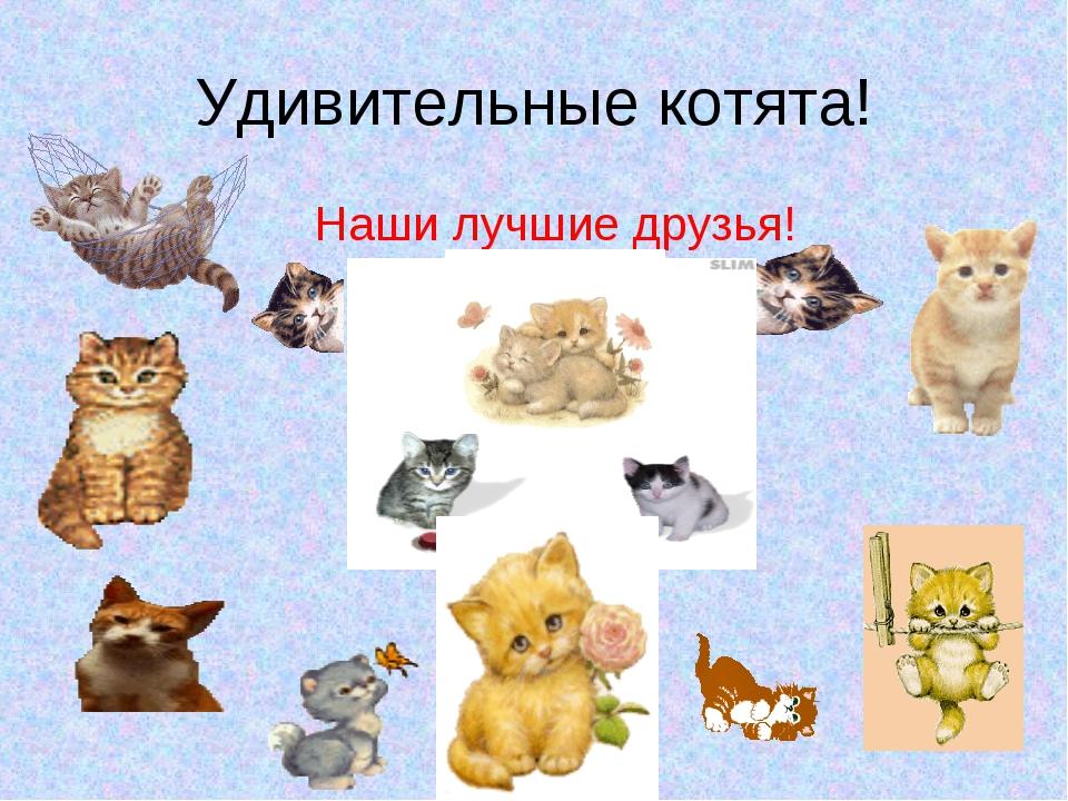Удивительные котята! Наши лучшие друзья!