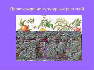 Происхождение культурных растений