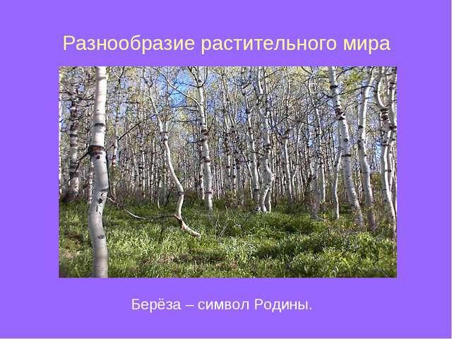 Разнообразие растительного мира Берёза – символ Родины.
