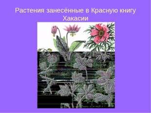 Растения занесённые в Красную книгу Хакасии