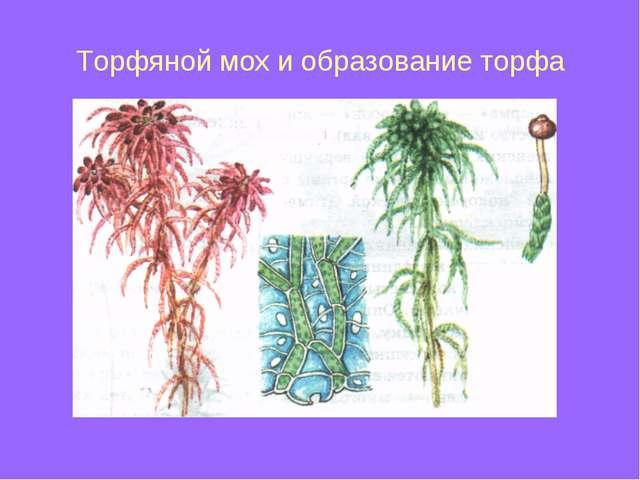 Торфяной мох и образование торфа