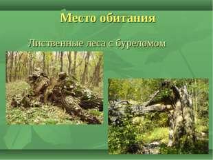 Лиственные леса с буреломом Место обитания