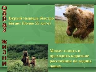 Бурый медведь быстро бегает (более 55 км/ч) Может стоять и проходить короткие