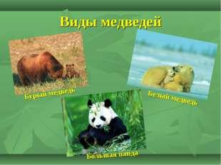 Виды медведей Бурый медведь Большая панда Белый медведь