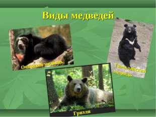 Виды медведей Очковый медведь Гризли Гималайский медведь
