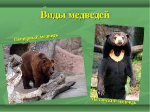 Виды медведей Пещерный медведь Малайский медведь