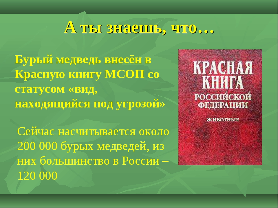А ты знаешь, что… Бурый медведь внесён в Красную книгу МСОП со статусом «вид,...