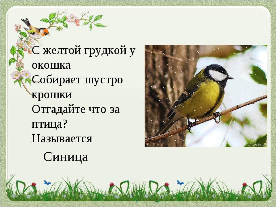 Стихи картинки про птиц