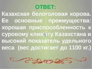 ОТВЕТ: Казахская белоголовая корова. Ее основные преимущества: хорошая приспо