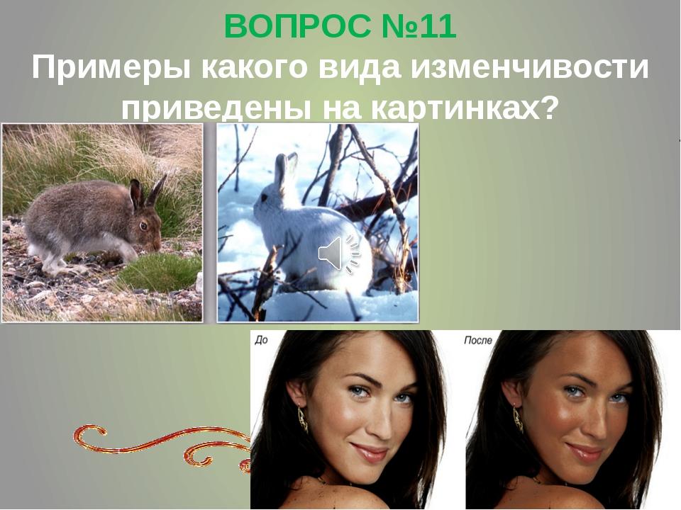 ВОПРОС №11 Примеры какого вида изменчивости приведены на картинках?