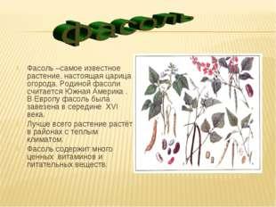 Фасоль –самое известное растение, настоящая царица огорода. Родиной фасоли сч