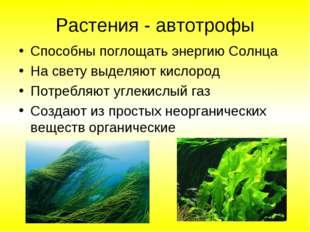 Растения - автотрофы Способны поглощать энергию Солнца На свету выделяют кисл