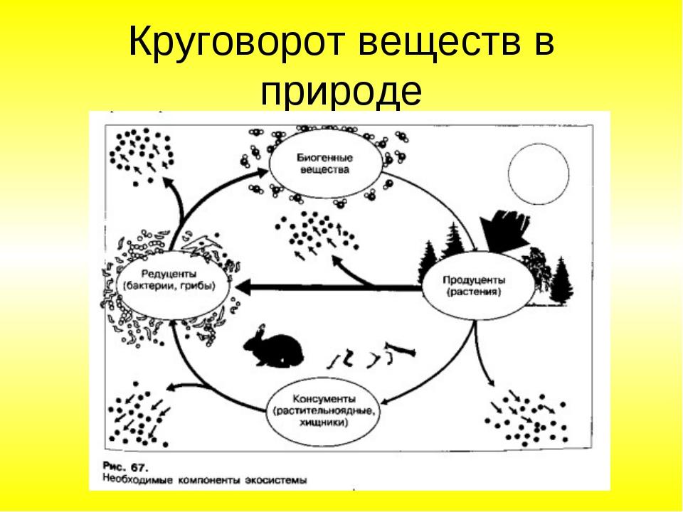 Картинки круговорот веществ в природе