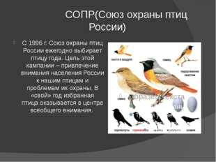 СОПР(Союз охраны птиц России) С 1996 г. Союз охраны птиц России ежегодно выб