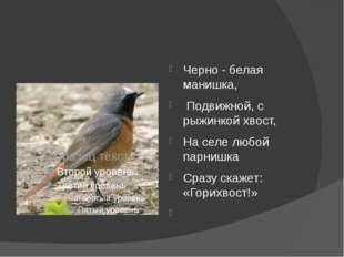 Черно - белая манишка, Подвижной, с рыжинкой хвост, На селе любой парнишка